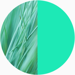 Colour swatch depicting the similarity in colour between Moment's accent colour and grass